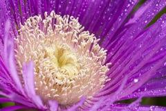 Λεπτομέρειες του όμορφου λουλουδιού Στοκ Εικόνες