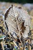 Λεπτομέρειες των παγωμένων φύλλων Στοκ Εικόνες