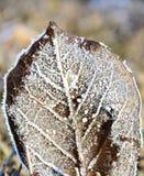 Λεπτομέρειες των παγωμένων φύλλων Στοκ φωτογραφία με δικαίωμα ελεύθερης χρήσης