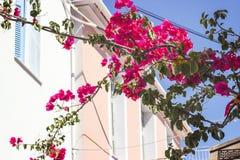 Λεπτομέρειες των ρόδινων λουλουδιών ενάντια στα παραδοσιακά ελληνικά σπίτια στην πλάτη στοκ εικόνες