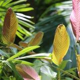 Λεπτομέρειες των φύλλων από το χρωματισμένο τροπικό φύλλωμα στοκ φωτογραφία