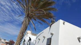 Λεπτομέρειες φοινικών ταξιδιού Santorini Στοκ Εικόνες