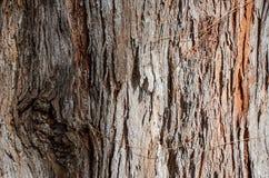 Λεπτομέρειες φλοιών δέντρων Στοκ Εικόνα