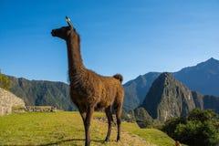 Λεπτομέρειες Picchu Machu Στοκ Φωτογραφίες