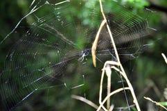 Λεπτομέρειες Spiderweb με την αράχνη Στοκ Εικόνες