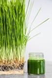 Λεπτομέρειες Wheatgrass των ριζών, των σπόρων, των νεαρών βλαστών και του υγιούς Juic Στοκ φωτογραφία με δικαίωμα ελεύθερης χρήσης