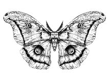 Λεπτομερές ρεαλιστικό σκίτσο μιας πεταλούδας/ενός σκώρου Στοκ Φωτογραφίες