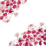Λεπτομερές τετραγωνικό πλαίσιο περιγράμματος τα χορτάρια, το gerbera και άλλα λουλούδια που απομονώνονται με στο λευκό Ευχετήρια  Στοκ Εικόνες