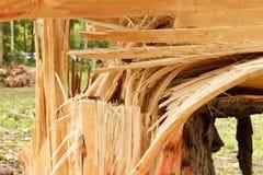 Λεπτομερής τραχιά σύσταση του ξύλου για το υπόβαθρο Στοκ εικόνα με δικαίωμα ελεύθερης χρήσης