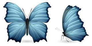 λεπτομερή πεταλούδα στ&omic Μπροστινή και πλάγια όψη Στοκ Φωτογραφία