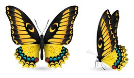 λεπτομερή πεταλούδα στ&omic Μπροστινή και πλάγια όψη Στοκ Εικόνες