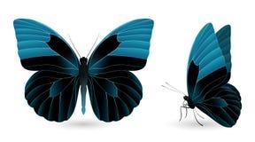 λεπτομερή πεταλούδα στ&omic Μπροστινή και πλάγια όψη Στοκ Εικόνα