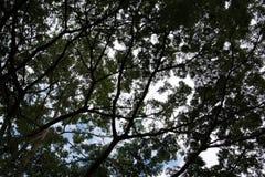 Λεπτομερείς κλάδοι και φύλλα δέντρων Στοκ φωτογραφία με δικαίωμα ελεύθερης χρήσης