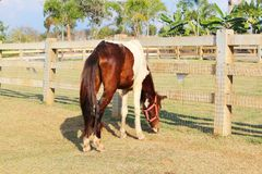 Λεπτό άλογο στο αγρόκτημα Στοκ εικόνα με δικαίωμα ελεύθερης χρήσης