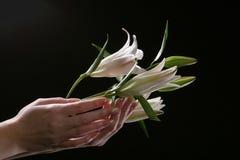 Λεπτό άσπρο λουλούδι κρίνων Στοκ φωτογραφία με δικαίωμα ελεύθερης χρήσης