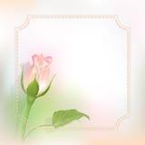Λεπτό διανυσματικό μπουμπούκι τριαντάφυλλου Στοκ Φωτογραφίες