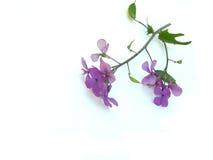 λεπτό λουλούδι στοκ φωτογραφίες
