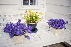 Λεπτό πορφυρό verbena λουλουδιών στον πίνακα έξω Στοκ Εικόνες