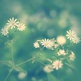 Λεπτό υπόβαθρο με τα wildflowers Στοκ εικόνα με δικαίωμα ελεύθερης χρήσης