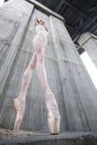 Λεπτό ballerina Στοκ εικόνα με δικαίωμα ελεύθερης χρήσης