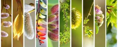 Λεπτό floral σύνολο άνοιξης και καλοκαιριού Στοκ Εικόνα