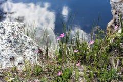 Λεπτό Wildflowers Στοκ εικόνες με δικαίωμα ελεύθερης χρήσης