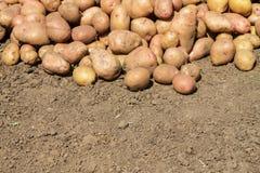 Λερωμένες πατάτες που βρίσκονται στο έδαφος Στοκ φωτογραφία με δικαίωμα ελεύθερης χρήσης