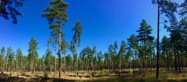 Λετονική άγρια φύση Στοκ φωτογραφίες με δικαίωμα ελεύθερης χρήσης