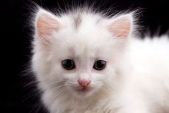 λευκές νεολαίες γατα&kapp Στοκ Φωτογραφία