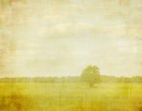 Λευκαμένη εικόνα ενός δέντρου στοκ εικόνες με δικαίωμα ελεύθερης χρήσης