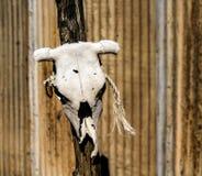 Λευκαμένο άσπρο κρανίο αγελάδων σε μια θέση Στοκ φωτογραφία με δικαίωμα ελεύθερης χρήσης