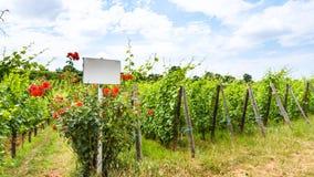 λευκοί πιάτο και ο Μπους τριαντάφυλλων κοντά στον αμπελώνα Στοκ Φωτογραφίες