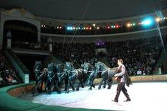 λευκορωσικό λευκορωσικό κράτος του Μινσκ π τσίρκων Στοκ Εικόνα