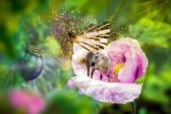 Λευκός μονόκερος με τα φτερά πεταλούδων στο ανθίζοντας ρόδινο λουλούδι παπαρουνών στοκ εικόνα