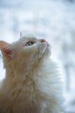 Λευκός ονειροπόλος Στοκ Φωτογραφίες