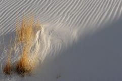 λευκό άμμων Στοκ Εικόνα