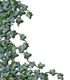 λευκό αμπέλων ανασκόπηση&sigm Στοκ Εικόνες
