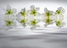 λευκό αντανάκλασης κορό&m Στοκ Εικόνες