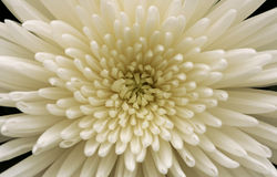 λευκό αστέρων Στοκ φωτογραφία με δικαίωμα ελεύθερης χρήσης