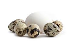 λευκό αυγών ανασκόπησης Στοκ Εικόνα