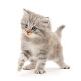 λευκό γατακιών ανασκόπησης Στοκ εικόνες με δικαίωμα ελεύθερης χρήσης