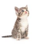 λευκό γατακιών ανασκόπησ& Στοκ Φωτογραφίες