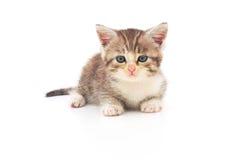 λευκό γατακιών ανασκόπησ& Στοκ εικόνες με δικαίωμα ελεύθερης χρήσης