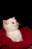 λευκό γατακιών καλαθιών Στοκ Εικόνες