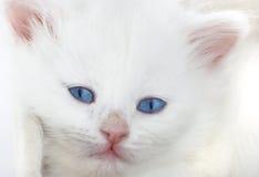 λευκό γατακιών καλαθιών Στοκ Φωτογραφίες
