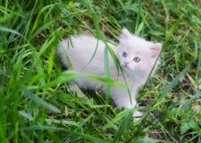 λευκό γατακιών στοκ εικόνα