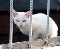 λευκό γατών κλουβιών Στοκ Εικόνα