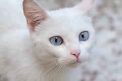 λευκό γατών Στοκ Εικόνα