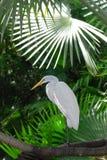 λευκό γερανών Στοκ Εικόνες
