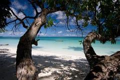 λευκό δέντρων άμμου παραλιών Στοκ εικόνα με δικαίωμα ελεύθερης χρήσης